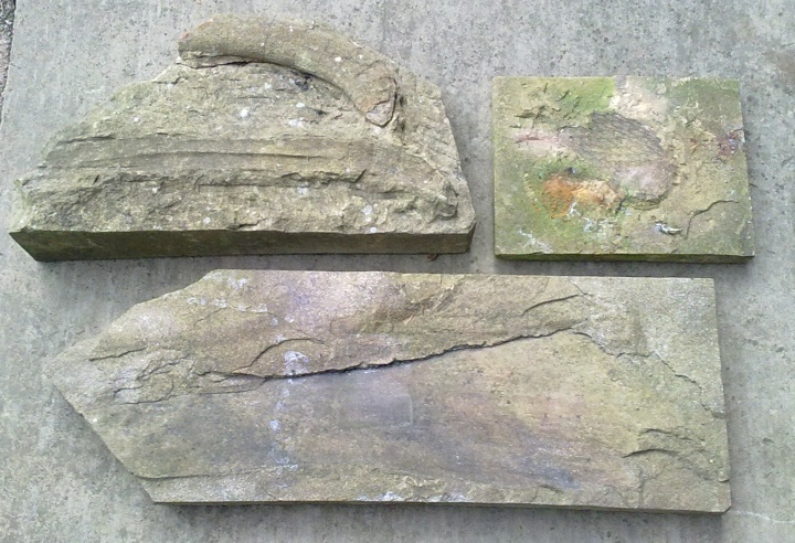 fossils in yorkstone